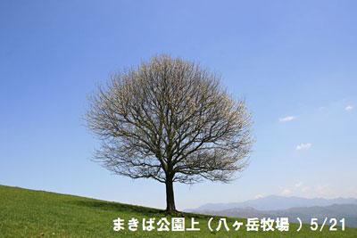 IMG_5063a.jpg